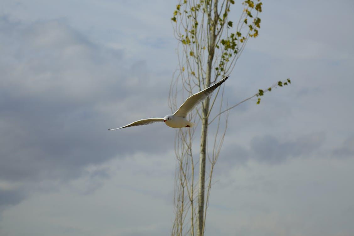 mouette, plumes, voler