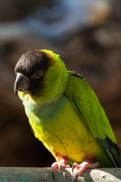 Green and Black Bird in Close Up Photography