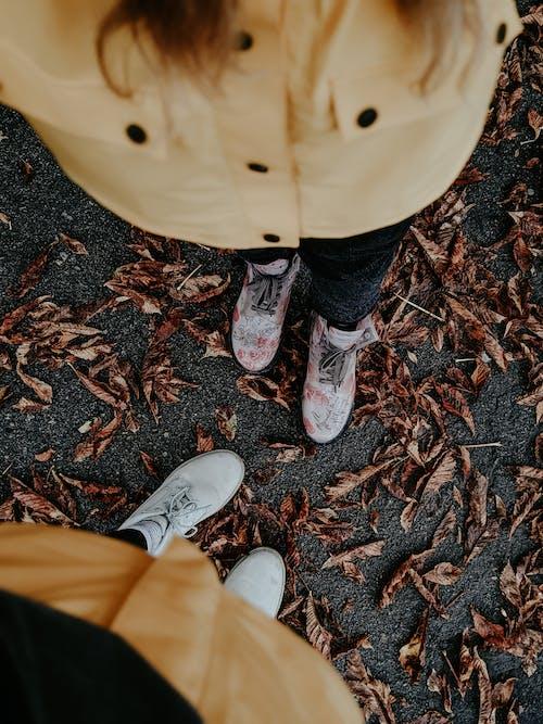 Gratis stockfoto met 31 oktober, blad, bladeren, donker