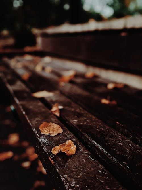 Gratis stockfoto met atmosfeer, blad, bladeren, chocolade