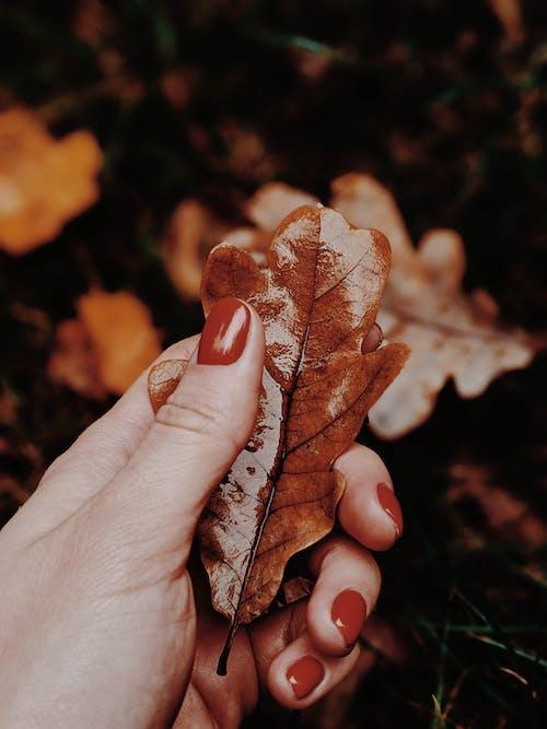 Gratis stockfoto met aflopend, atmosfeer, blad, bladeren