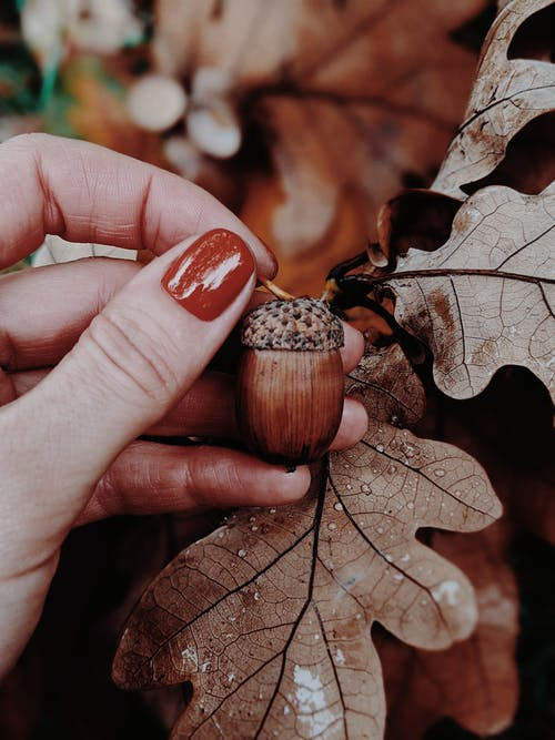 Gratis stockfoto met atmosfeer, blad, bladeren, bloemen