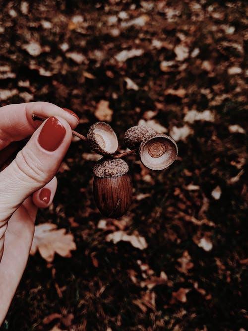 Gratis stockfoto met atmosfeer, blad, bladeren, bodem