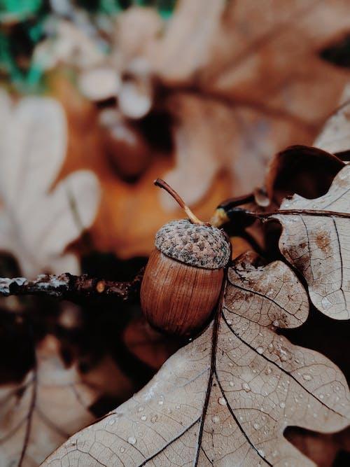Gratis stockfoto met atmosfeer, blad, bladeren, bloem