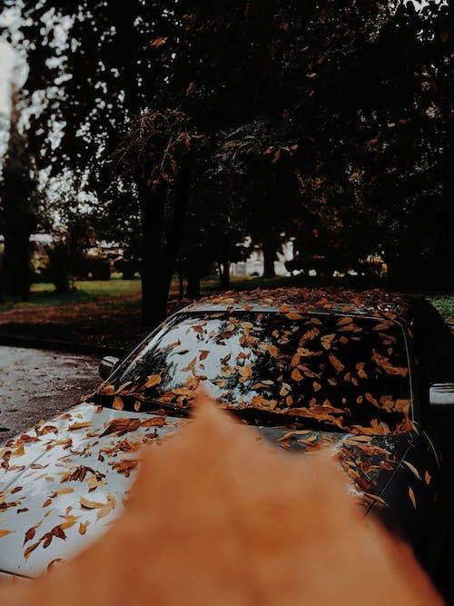 Gratis stockfoto met atmosfeer, auto, blad, bladeren