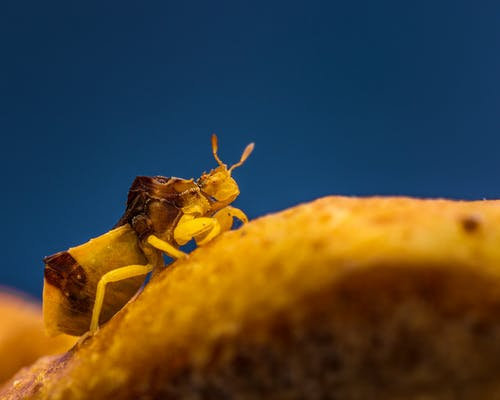 Macro shot of yellow insect crawling on blurred brown surface in evening nature