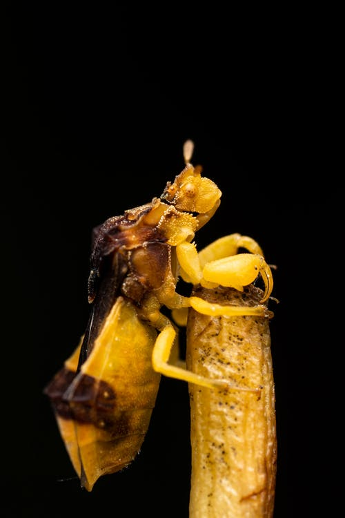 Yellow insect standing on twig in studio