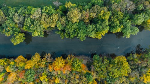 Top view of narrow river between bright trees growing in woods in fall