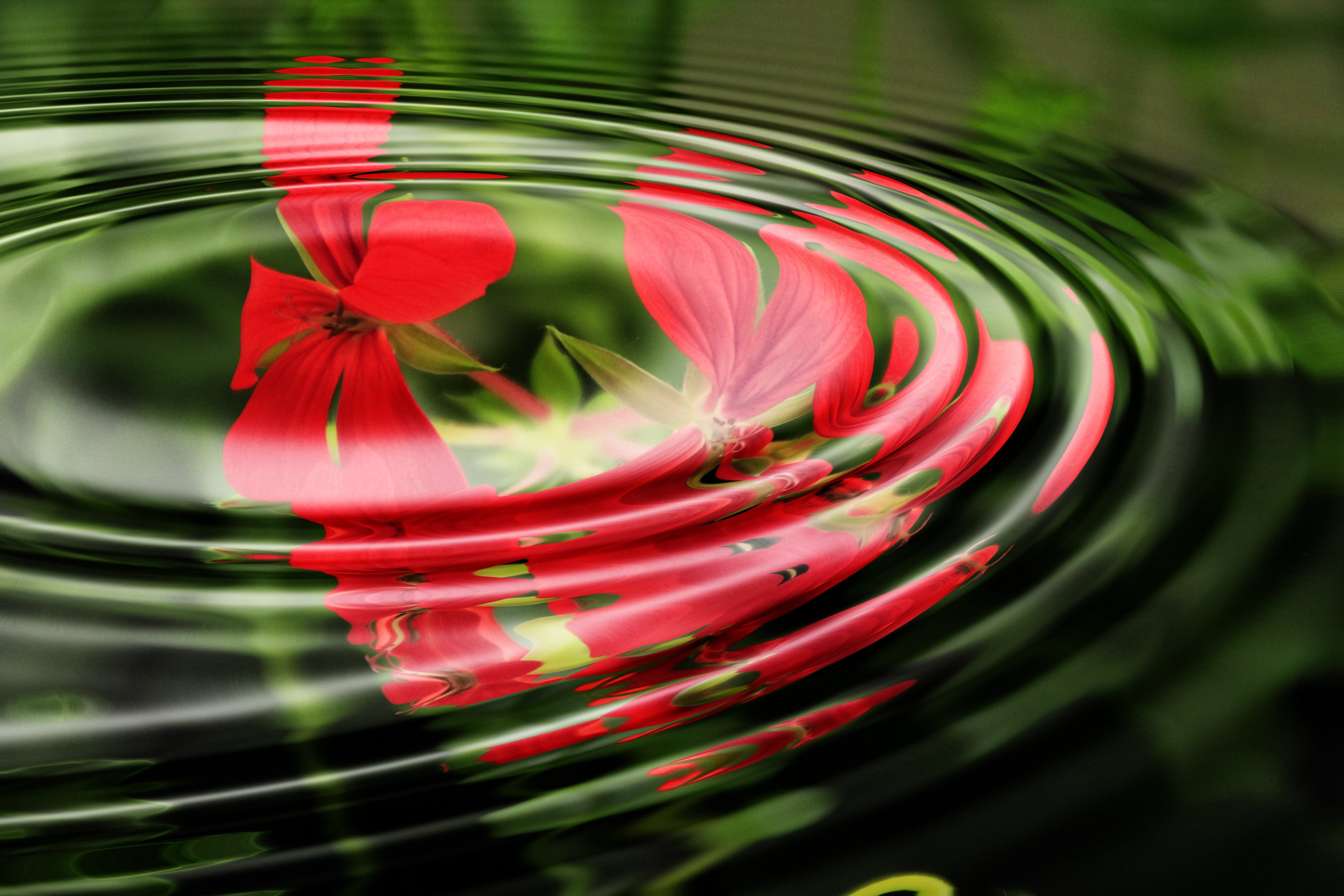Red Flowers Under the Water