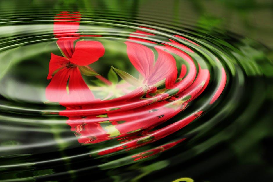 background, circle, geranium