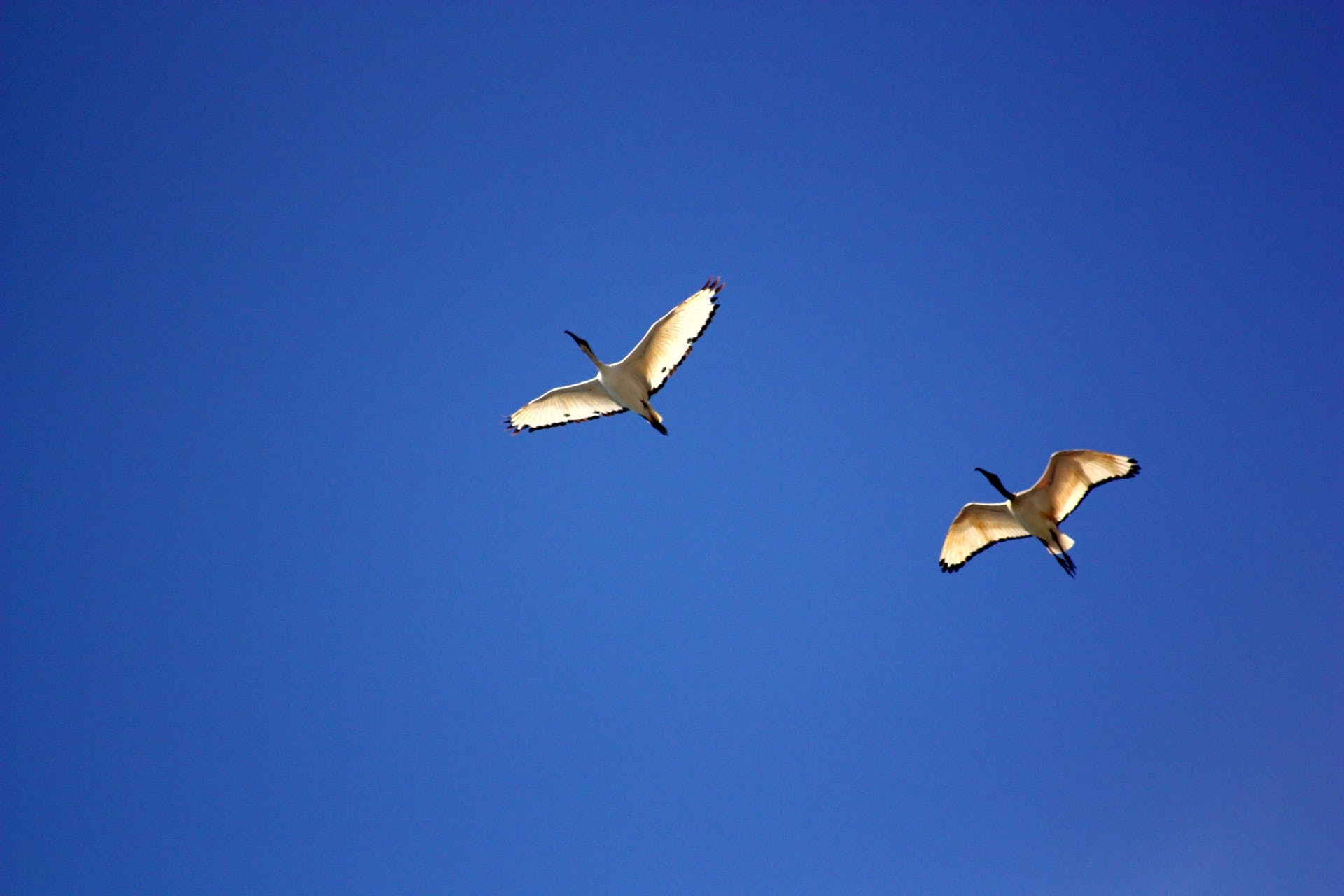 Sea Gull Flying Under Blue Sky during Daytime