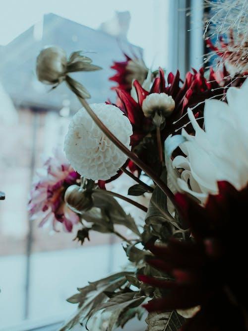 Bunch of blooming flowers near window