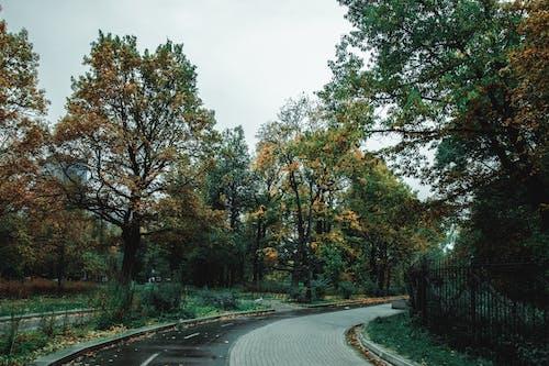 Path through autumn trees in park