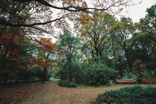 Scenery of footpath covered dry fallen foliage in autumn park with green and yellow trees