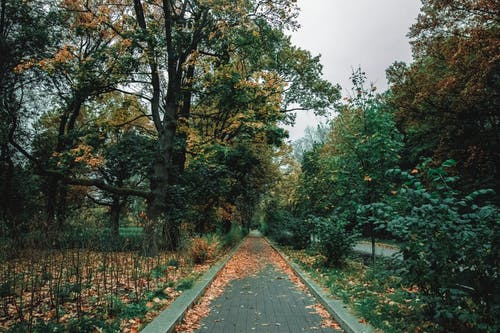Path through green trees and fallen leaves