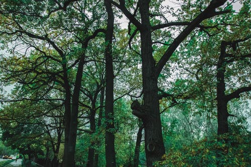 Fotos de stock gratuitas de ángulo bajo, árbol, arboleda