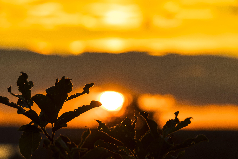 Gratis lagerfoto af fredelig, himmel, makrofoto, sol