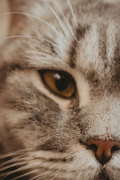 Grey and White Cats Eye