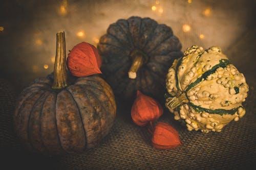 Immagine gratuita di agricoltura, autunno, cadere, celebrazione