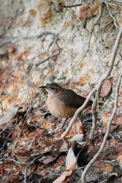 Adorable Troglodytes troglodytes bird in autumn forest