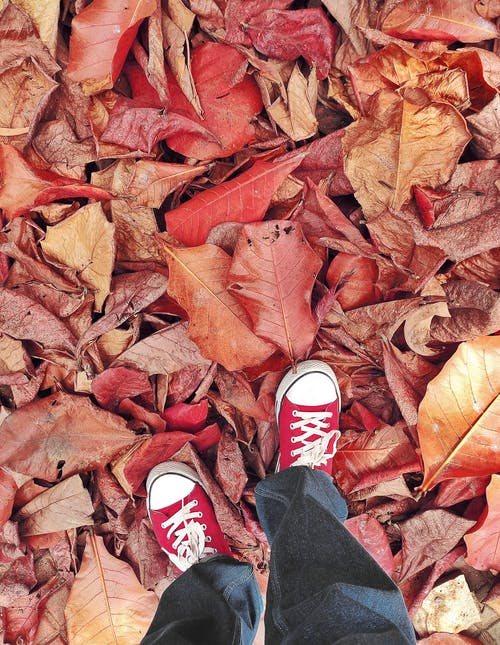 High-Angle Shot of a Person in Red Converse Standing on Brown Dry Leaves