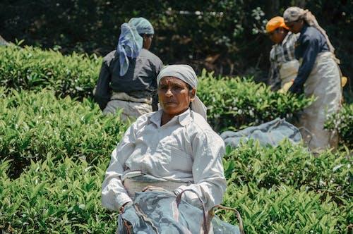 Ethnic elderly women working in plantation