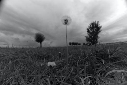 Free stock photo of 35mm, 35mm film, beautiful flower