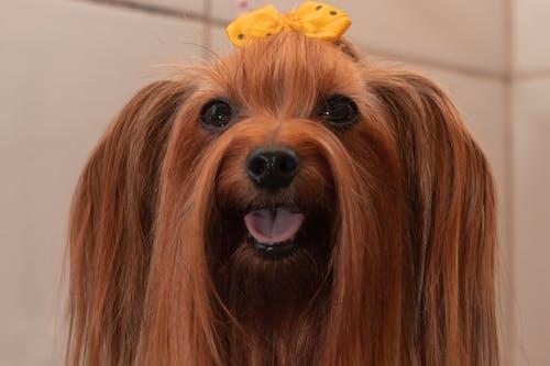 Immagine gratuita di alla ricerca, amore, animale domestico, cane