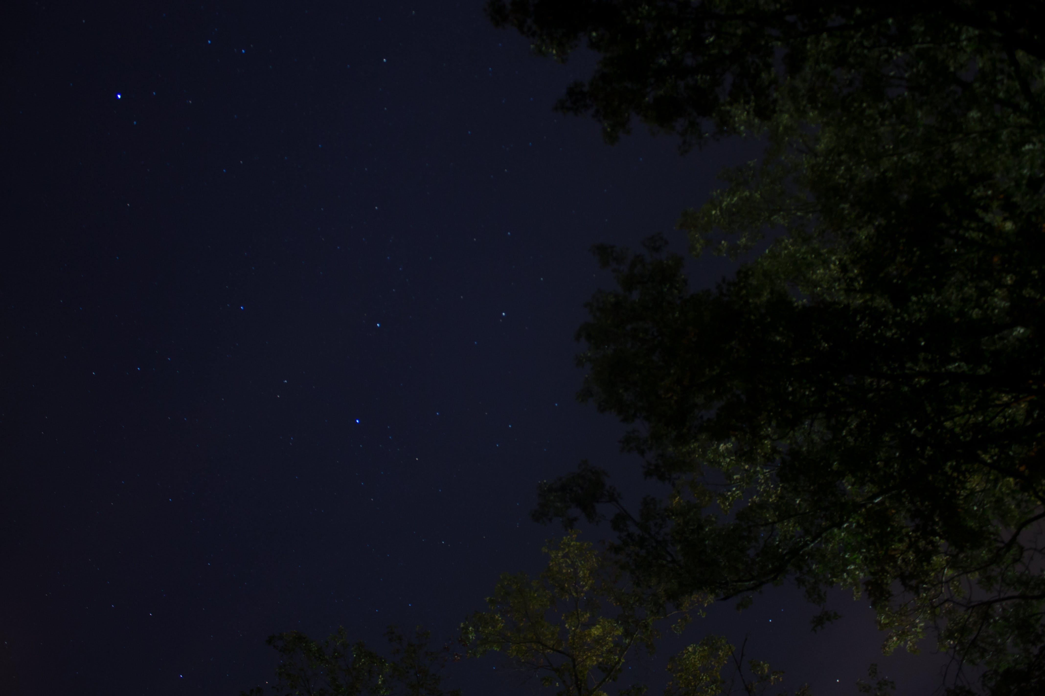 Free stock photo of night sky, stars, suburb, trees
