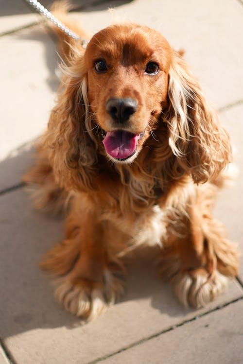 Photos gratuites de animal, animal de compagnie, chien