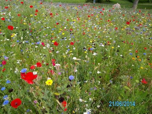 Fotos de stock gratuitas de prado de flores