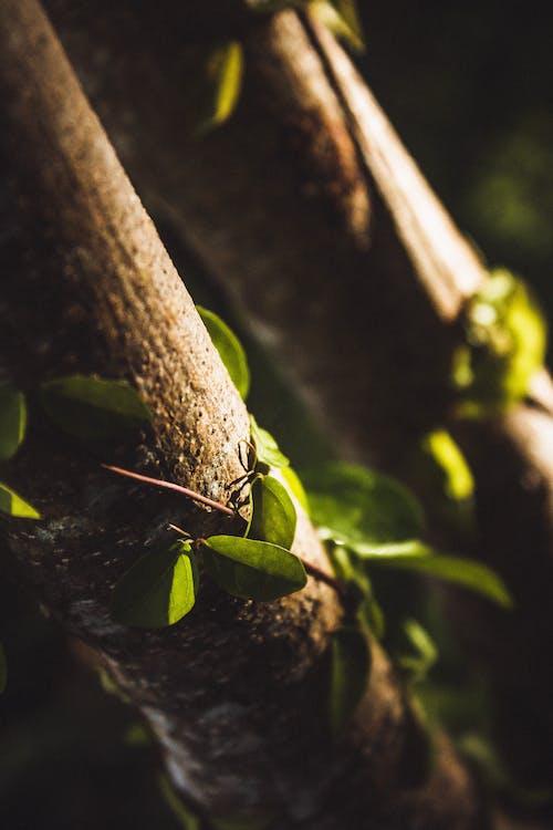 Безкоштовне стокове фото на тему «goldenhour, атмосферний, Безхребетні, дерева»