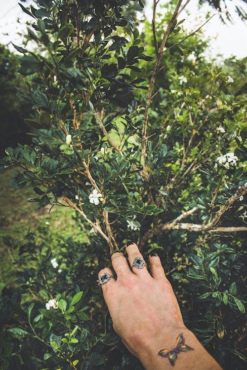 Безкоштовне стокове фото на тему «tatto, ботанічний сад, відділення, галузь»