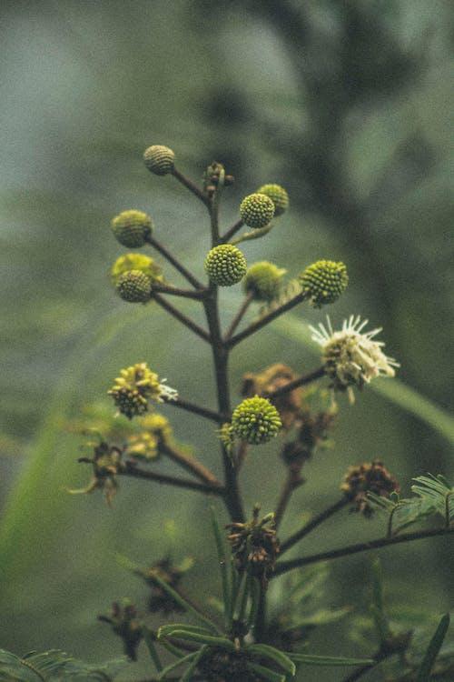 Безкоштовне стокове фото на тему «vintage фото, атмосферний, Безхребетні, біологія»