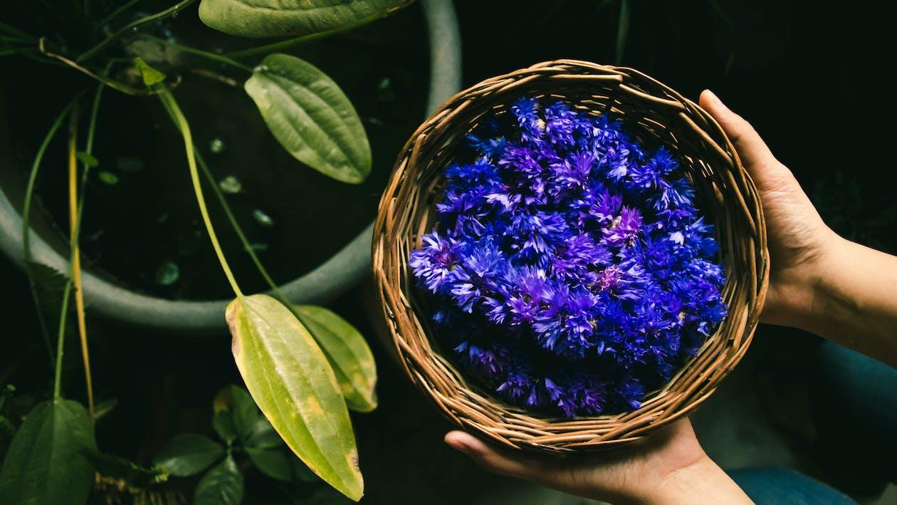Ảnh lưu trữ miễn phí về buồn rầu, đẹp, hoa đẹp