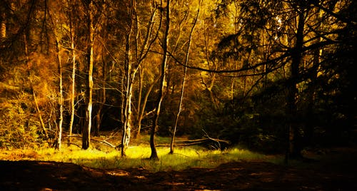 Free stock photo of autumn landscape, golden hour, oil painting, woodland scene