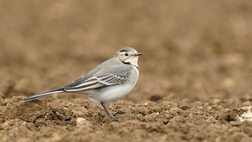Gray and White Bird on Brown Soil