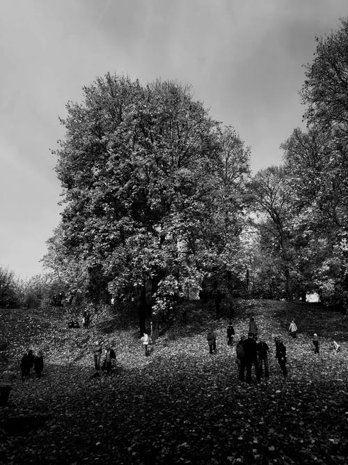 Grayscale Photo of People Walking on Grass Field Near Trees