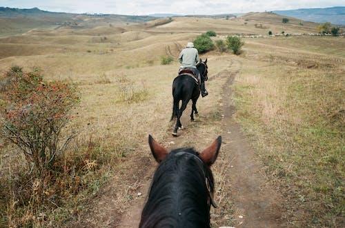 Anonymous jockey riding horse in mountainous countryside