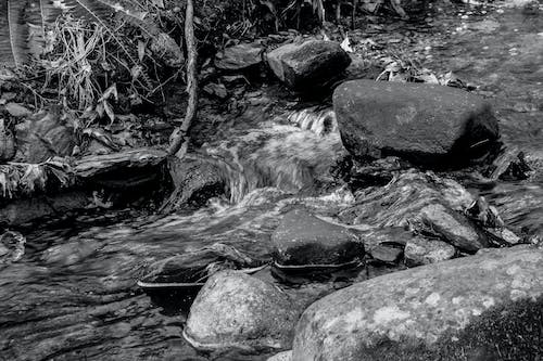 Free stock photo of brook, cascading water, creek