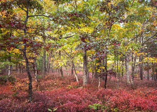 Free stock photo of autumn, beauty in nature, colors of autumn