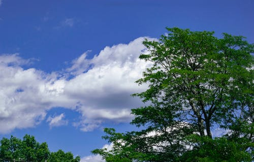 Free stock photo of blue sky, clouds, cloudscape