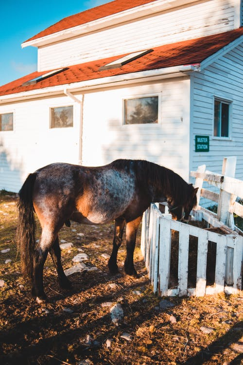 Adorable horse grazing in paddock in village