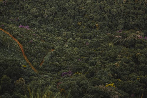 Drone view of green trees with lush vegetation growing in highlands in tropical forest in summer day in nature outside