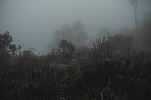 Foggy morning in misty forest