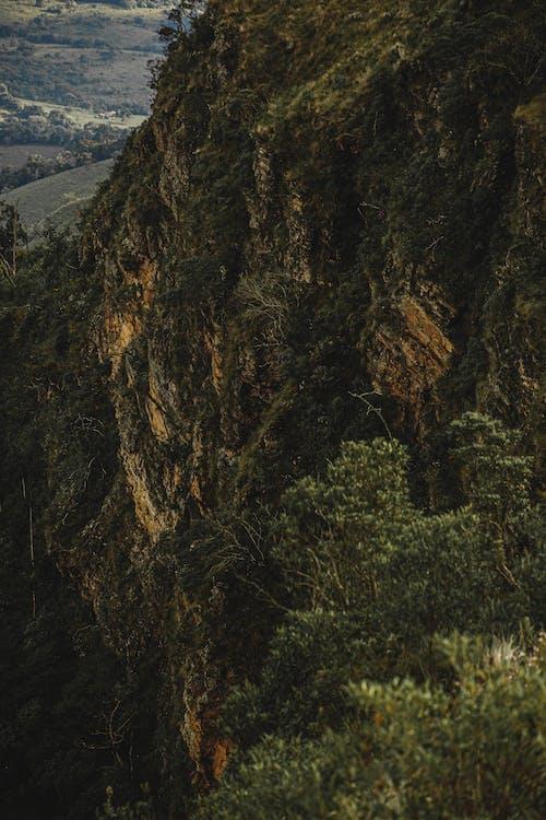 Photos gratuites de arbre, aventure, caillou