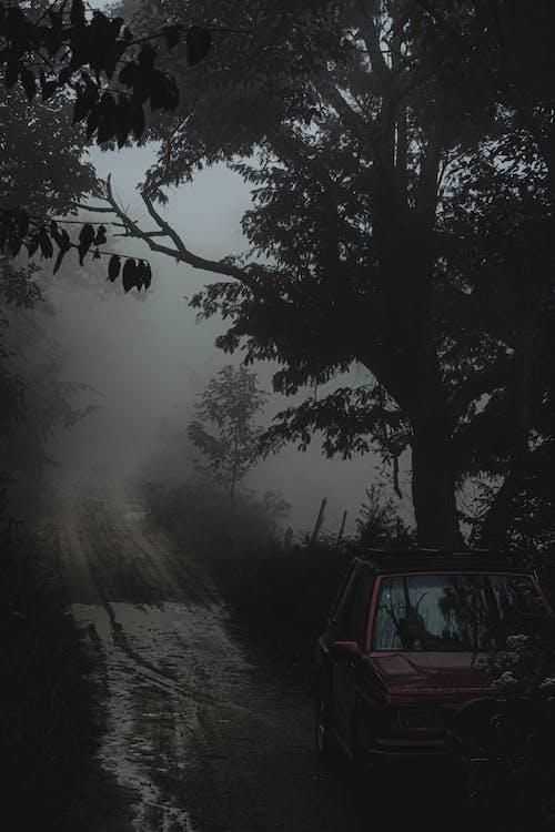 Photos gratuites de arbre, automobile, bois