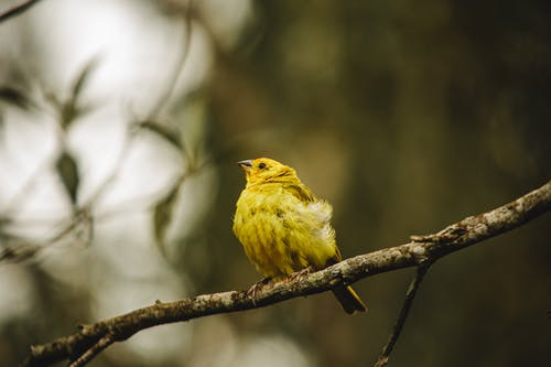 From below of small bird with yellow plumage sitting on branch of tree in nature in forest in daylight with blurred background