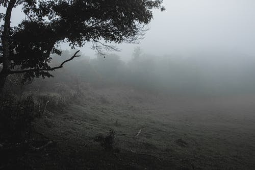 Rural field in foggy weather