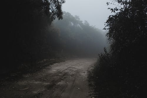 Photos gratuites de arbre, bois, brouillard